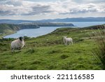 Sheep In Scotland