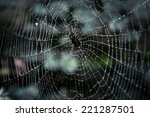 Macro Shot Of Big Spider Web...