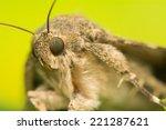 catocala elocata | Shutterstock . vector #221287621
