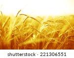 backdrop of ripening ears of...   Shutterstock . vector #221306551