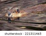 swimming beaver  castor...   Shutterstock . vector #221311465