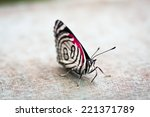 butterfly   close up of a... | Shutterstock . vector #221371789