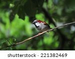 house sparrow perched on a... | Shutterstock . vector #221382469