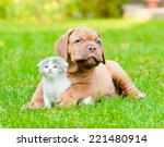 Stock photo bordeaux puppy dog with newborn kitten on green grass 221480914