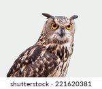 Stock photo eagle owl in closeup isolated on white background 221620381
