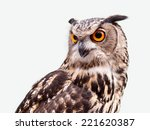 Stock photo eagle owl in closeup isolated on white background 221620387