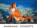 red fox  | Shutterstock . vector #221622271
