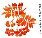 autumn rowanberry vector... | Shutterstock .eps vector #221659201