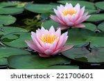 Beautiful Lotus Flower In The...