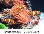 sea anemone and clown fish  | Shutterstock . vector #221713375