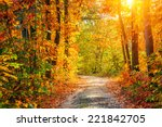 road in the autumn forest   Shutterstock . vector #221842705