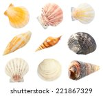 Collage Of Shells Isolated On...
