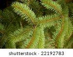 evergreen texture   Shutterstock . vector #22192783