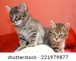 Stock photo two tabby kittens playing on a cushion with a curious look 221979877