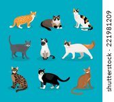 Stock vector set of vector cats depicting different breeds and fur color standing sitting and walking on a blue 221981209