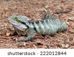 australian eastern water dragon ... | Shutterstock . vector #222012844