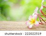 frangipani flower on wooden... | Shutterstock . vector #222022519