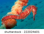 Seahorse On The Mooring In...