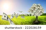 Money Tree Growing In The...