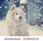 Fluffy White Dog Under The...