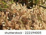 grass flower field on sunlight | Shutterstock . vector #222194005