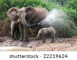 Stock photo african elephant mother and baby cooling off at a water hole 22219624