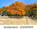 colorful trees in city park of... | Shutterstock . vector #222349699