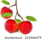 Red Apples On Apple Tree Branc...