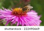 Bee Working On Michaelmas...