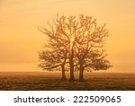 The Sun Goes Up Behind Trees I...