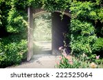 Old Wooden Gate With Lianas