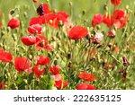 wild red poppies growing in the ... | Shutterstock . vector #222635125