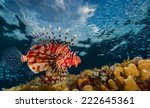 Lion Fish Swimming Over Coral...