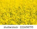 blooming field in ukraine | Shutterstock . vector #222658795