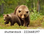 brown bear with cub in forest | Shutterstock . vector #222668197