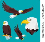 Stock vector bald eagle vector cartoon illustrations of four recognizable stances and situations of pride and 222668239