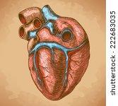 vector illustration of... | Shutterstock . vector #222683035