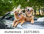 Two Dogs Go For A Ride Wearing...