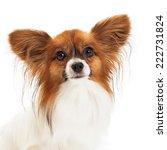 closeup photo of a pretty sable ... | Shutterstock . vector #222731824