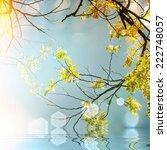 acacia flower  | Shutterstock . vector #222748057
