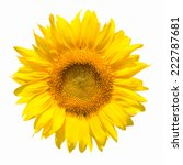 Sunflower Flower Isolated On A...