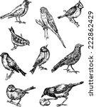 birds | Shutterstock .eps vector #222862429