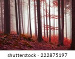 magic red colored foggy forest... | Shutterstock . vector #222875197