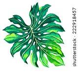 Single Palm Leaf  Monstera.