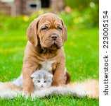 Stock photo bordeaux puppy dog hugs newborn kitten on green grass 223005154