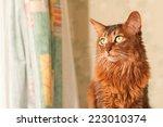 somali cat portrait at home... | Shutterstock . vector #223010374