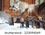 Horse On A Field In Winter