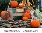 Pumpkins And A Cat On...