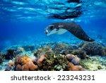 manta ray filter feeding above... | Shutterstock . vector #223243231