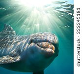 a dolphin underwater with... | Shutterstock . vector #223245181